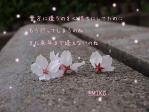 20140406sakura1