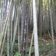 竹林の中に