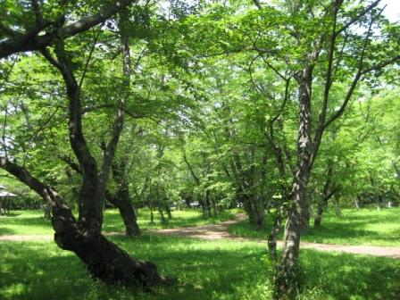 新緑の臼杵公園