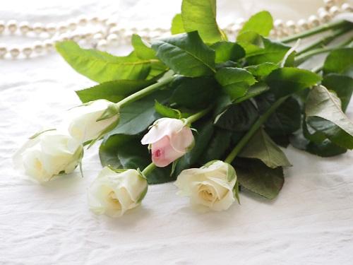 Whiterose1a